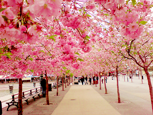 hclubflowerscaminho-de-flores